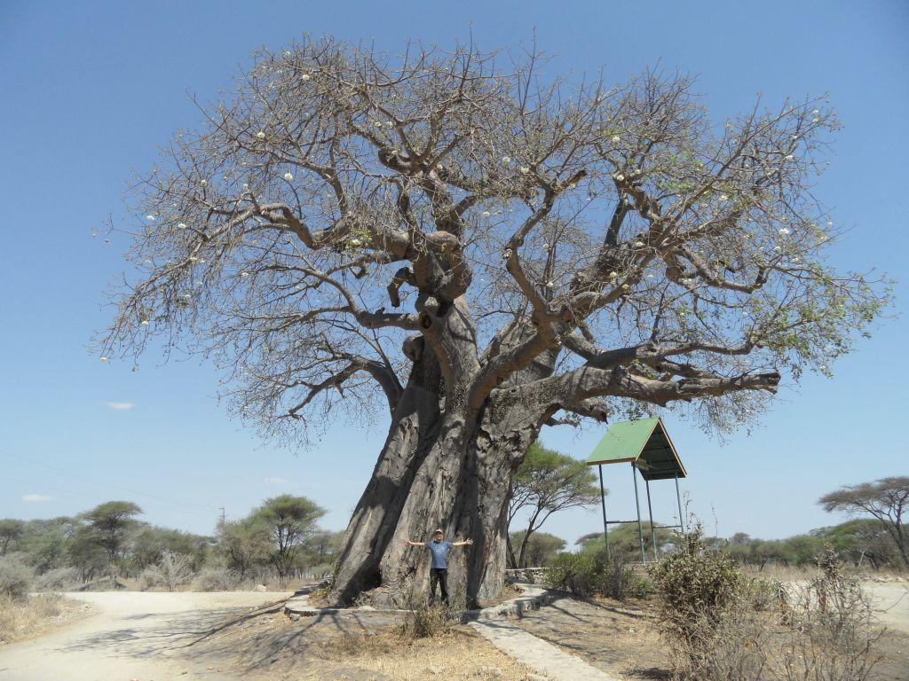 Baobab ağacının önünde