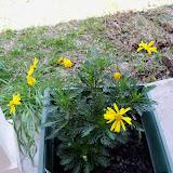 Gardening 2010 - 101_0577.JPG