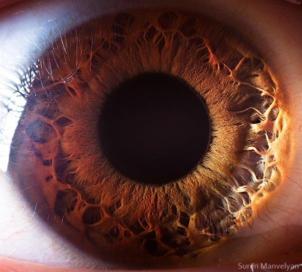 human eyes 1 (9)