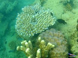 family trip pulau pari 090716 GoPro 30