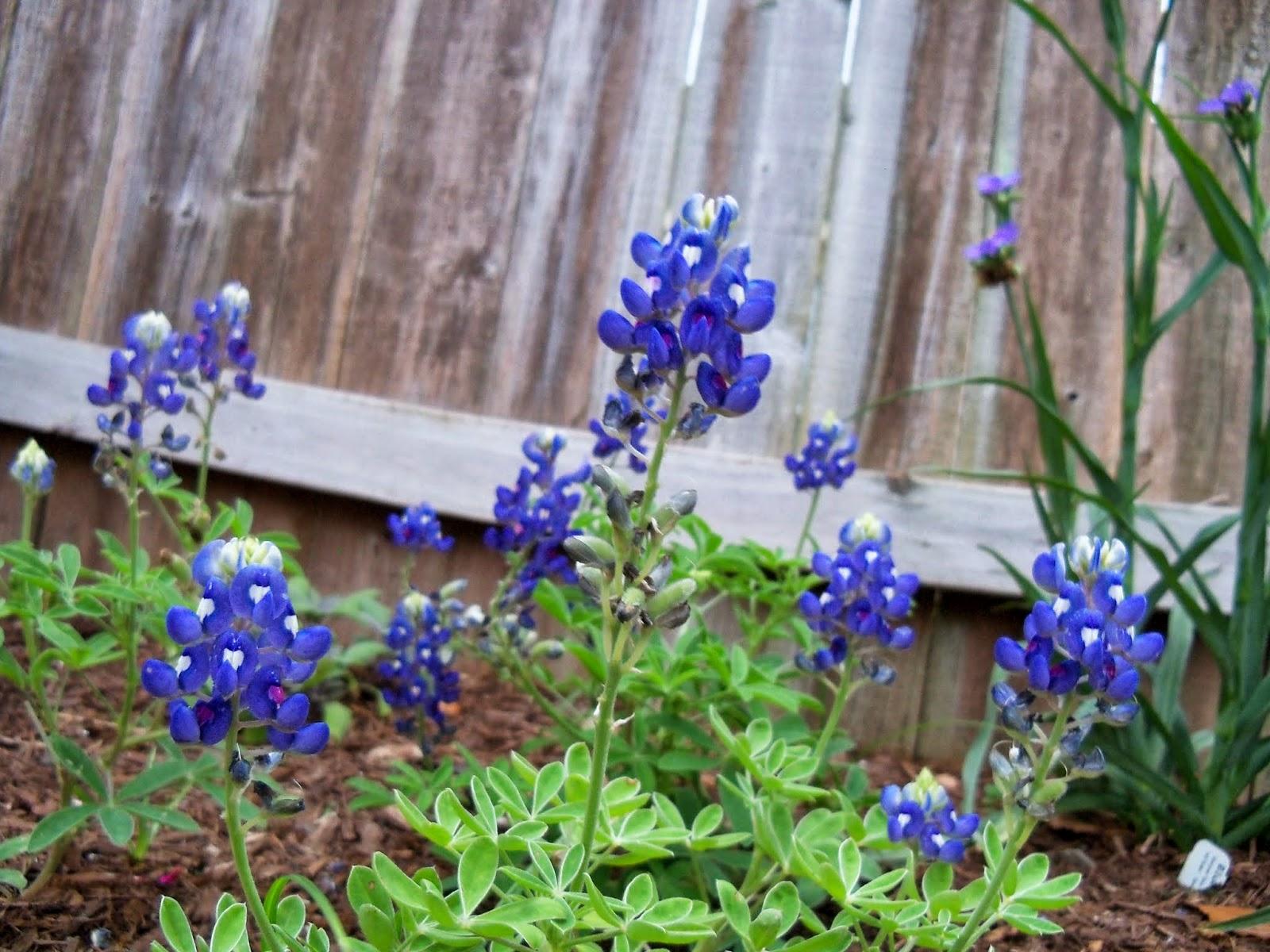 Gardening 2014 - 116_1463.JPG