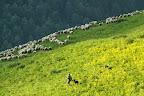RENTRE TES BLANCS MOUTONS   Clarpé, une amie alpagiste dans les Hautes-Alpes