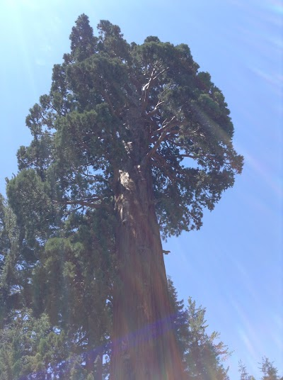 Sequoia National Park - Национальный парк секвойя