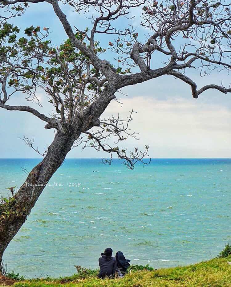 Pohon Keben Pantai Kesirat Jogja