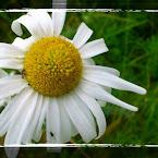 20120722-01-dasiy.jpg