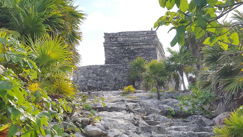 Lezard, iguana, Tulúm, Cancún, Mexico, Ruines de Tulum, plages, beach, Cancún, Mexique, Mexico, site archeologique, elisaorigami, travel, blogger, voyages, lifestyle, Riviera Maya, Yucatan, Bahia Principe