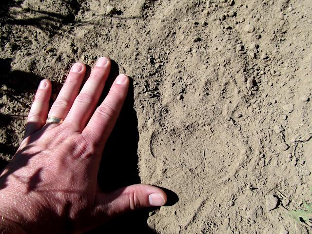 Small bear track