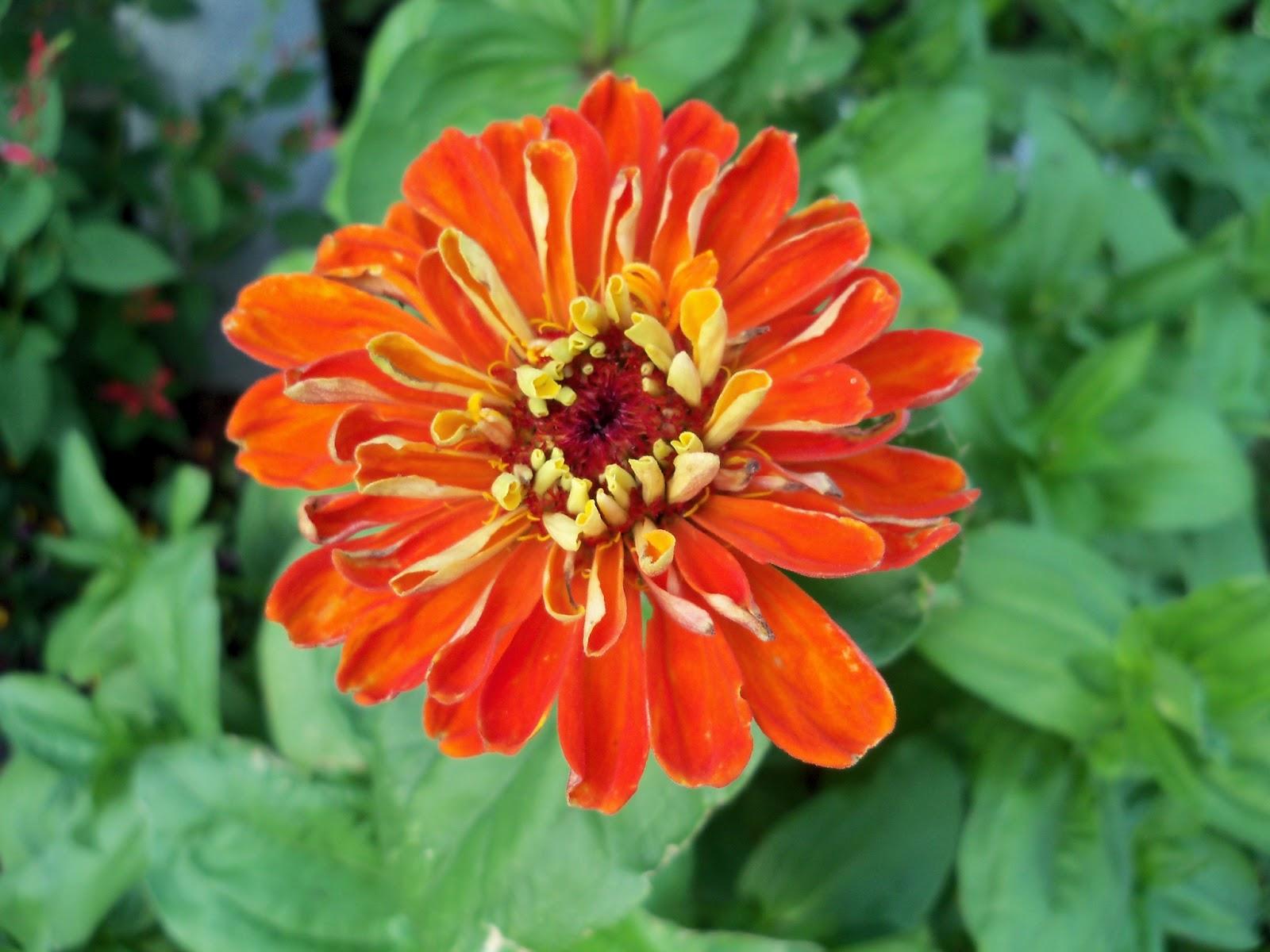 Gardening 2011 - 100_7724.JPG