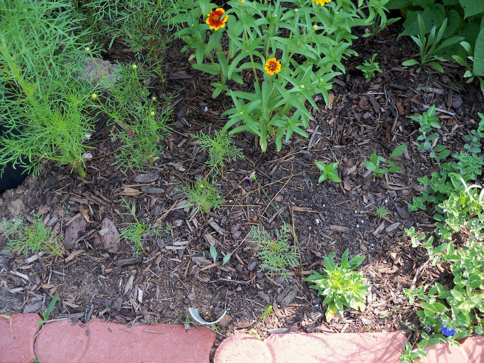 Gardening 2010, Part Two - 101_3056.JPG