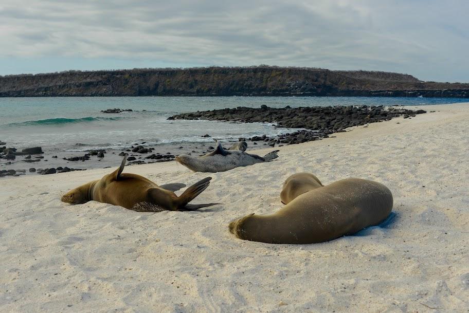 galapagos - Galapagos_FB-51.jpg