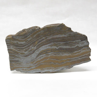 Veined Petrified Wood Specimen