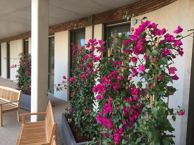 Bougainvillea in lange plantenbakGrote kunstplanten prijzen voor buiten kopen of huren groot goedkoop hangend of tegen muur met bloemen palmboom op terras of tegen wand in de winkel