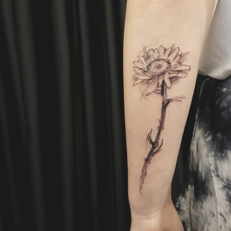 este_elegante_daisy_esboço_estilo_de_tatuagem