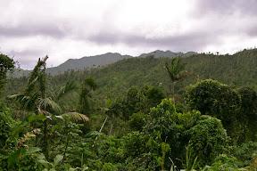Rainforest in Grand Etang National Park, Grenada