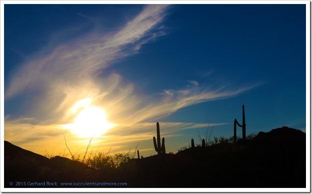 151230_Tucson_Saguaro-NP-East_0050