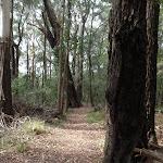Toomey Walk (225820)