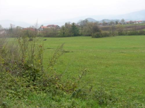 Green farmland