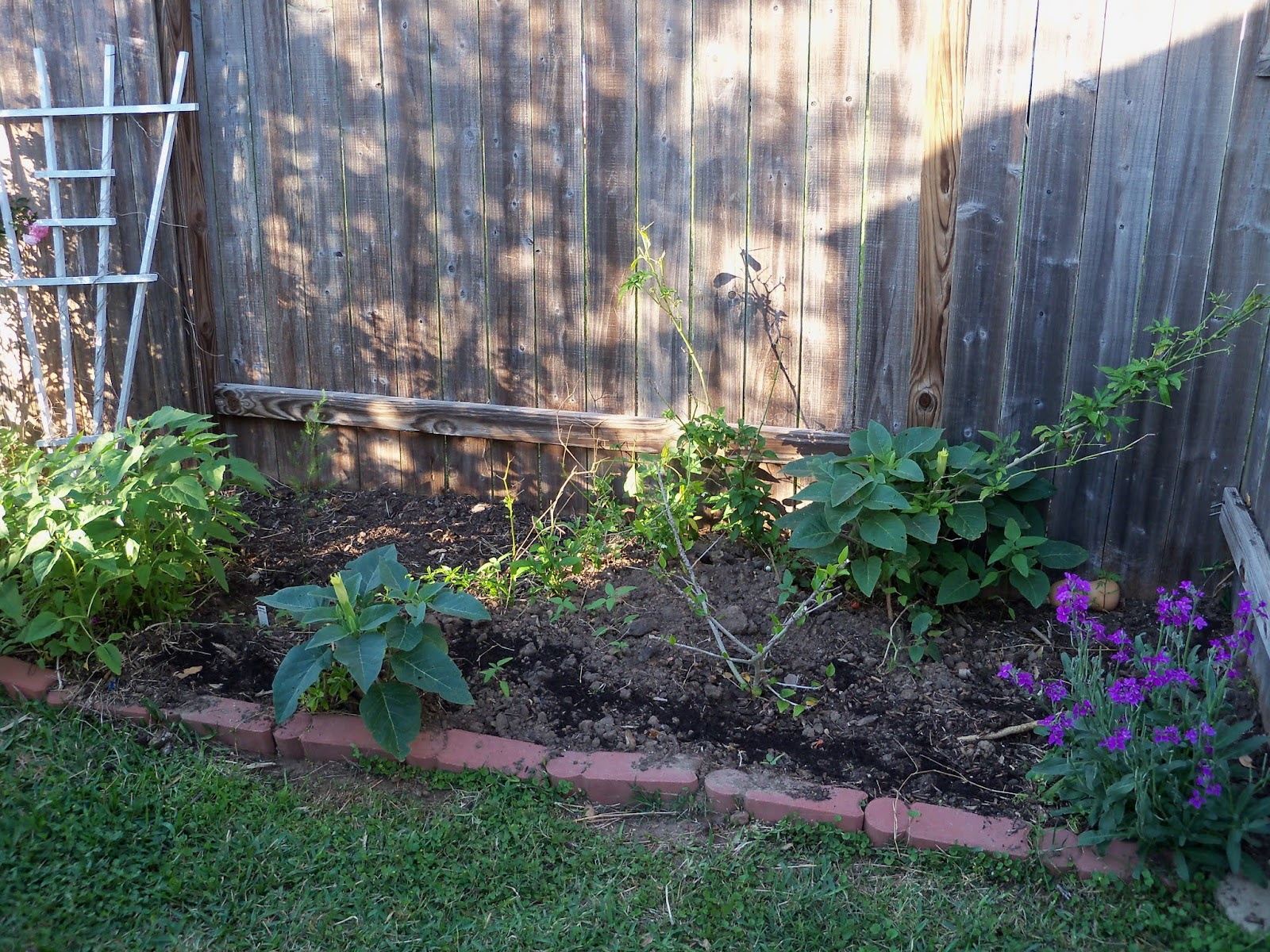 Gardening 2013 - 115_5368.JPG