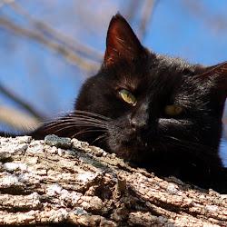 Le Chat Perché's profile photo