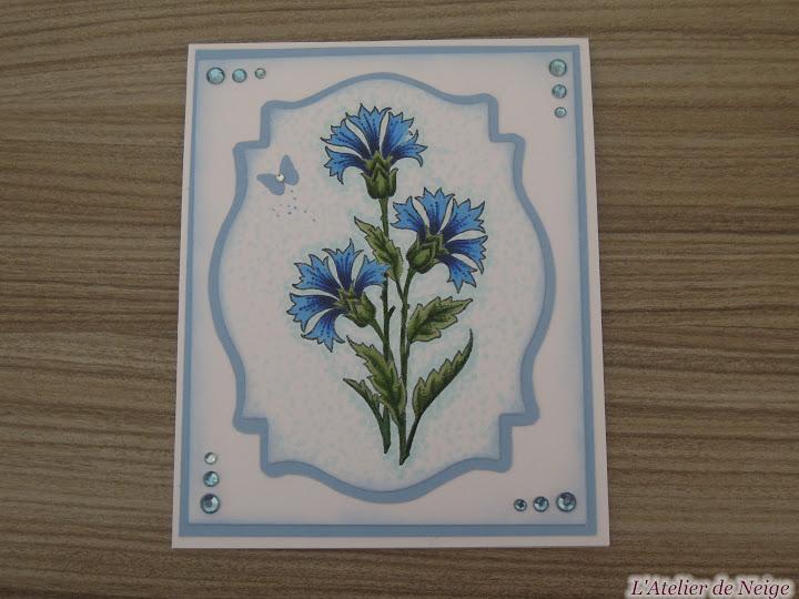 016 - Bleuets