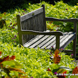 10-26-14 Dallas Arboretum - _IGP4303.JPG