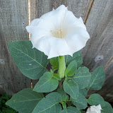 Gardening 2011 - 100_0055.JPG