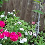 Gardening 2013 - 115_6012.JPG