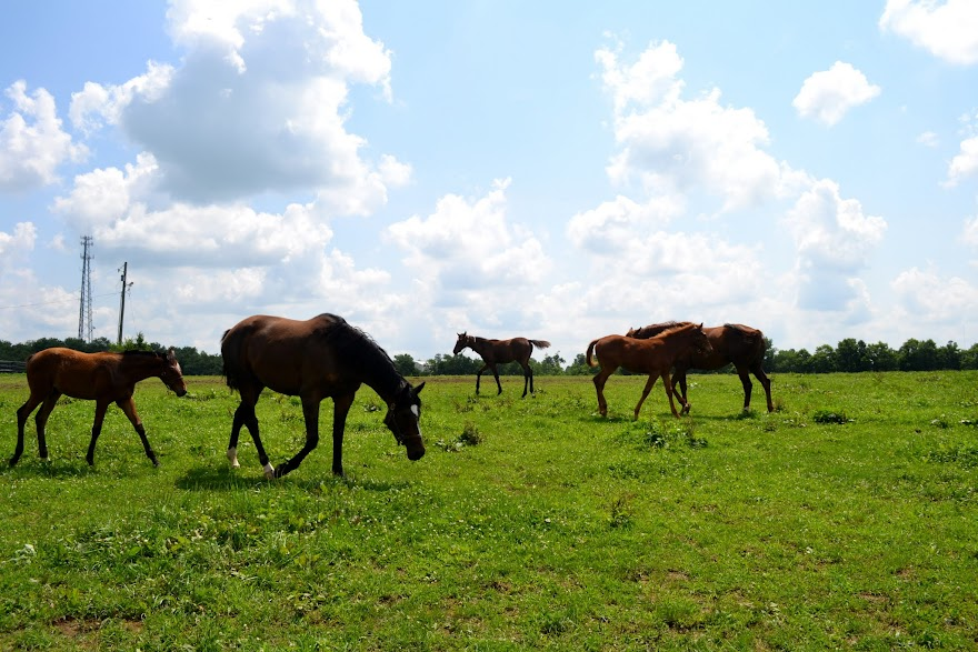 Тур по лошадиным фермам, Кентукки (Kentucky Horse Farm Tour)