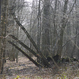Forêt de Dreux. Les Hautes-Lisières (Rouvres, 28), 23 mars 2012. Photo : J.-M. Gayman
