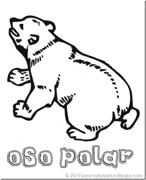 osos polar  (2)