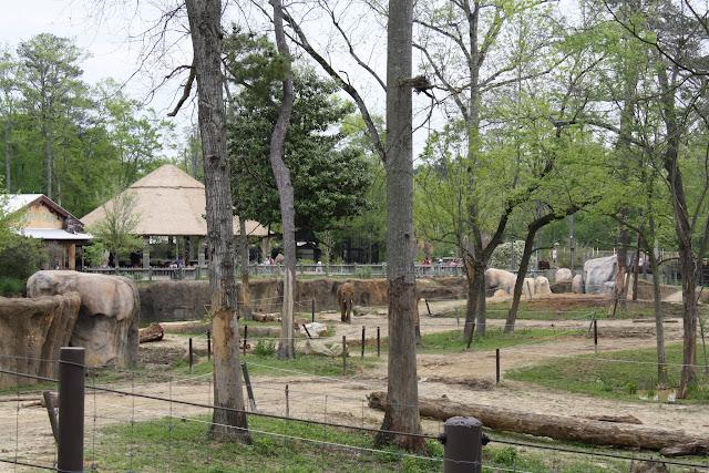 Zoo Snooze 2015 - IMG_7266.JPG