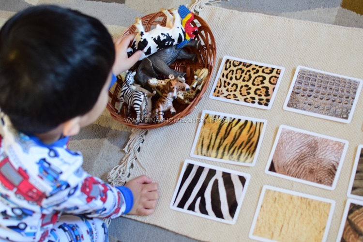 Animals Skin Cover Activities