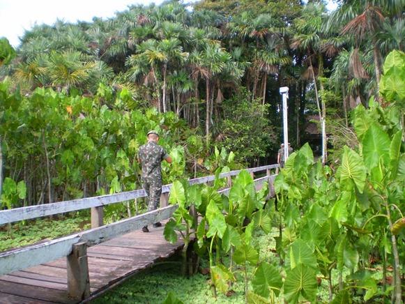 Parque Estadual do Utinga , Belém do Parà, foto: Odilson Sà