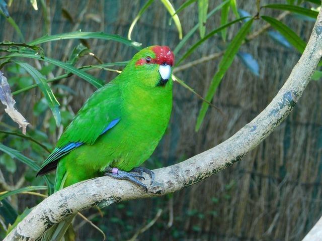 C075_NZ NI Mt Bruce Wildlife Centre_2018-04-27_DSCN9103
