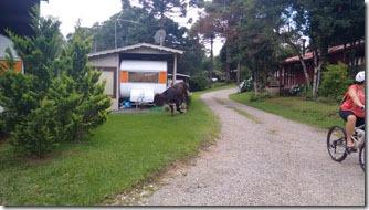 ambiente-camping-gramado-9