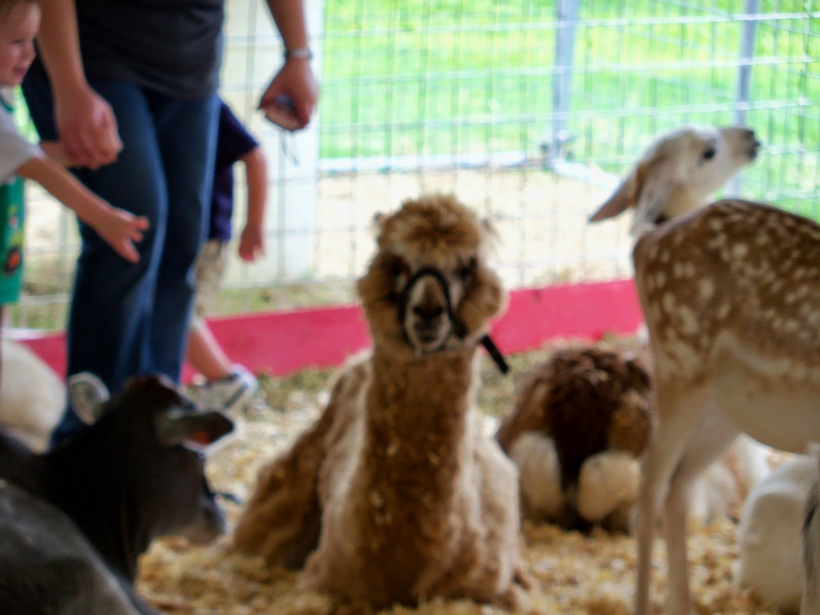 Fort Bend County Fair 2014 - 116_4292.JPG