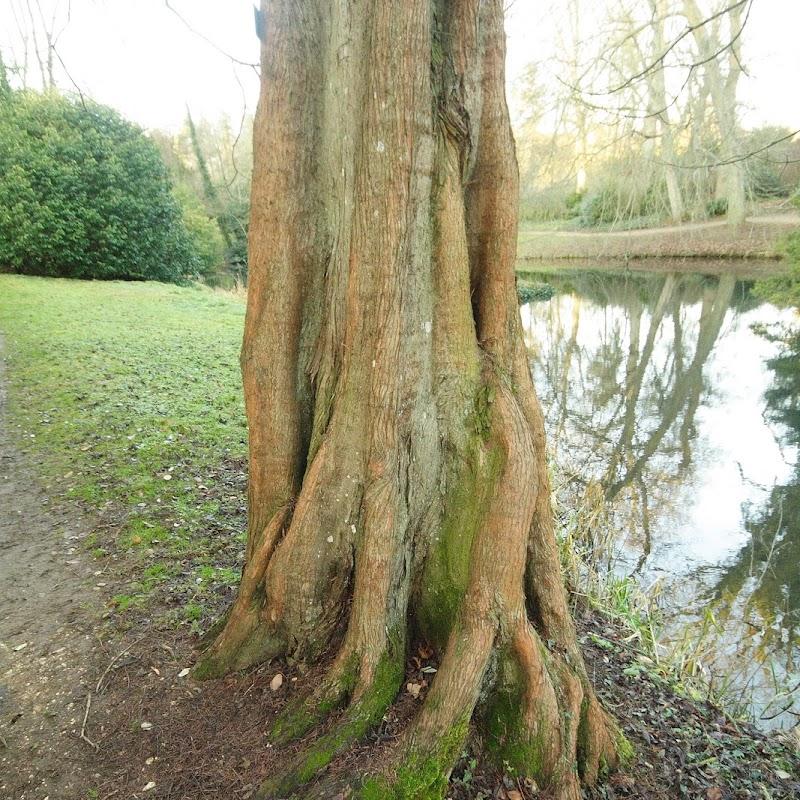 Stowe_Trees_27.JPG