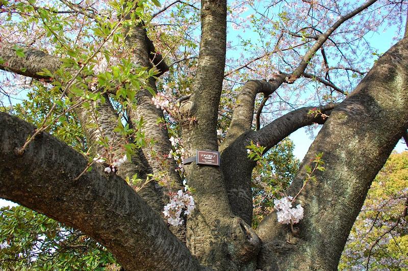 2014 Japan - Dag 11 - jordi-DSC_1015.JPG