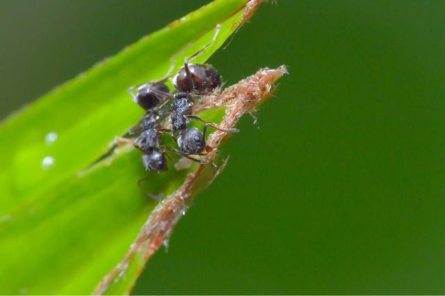 Macro Photo - Ant