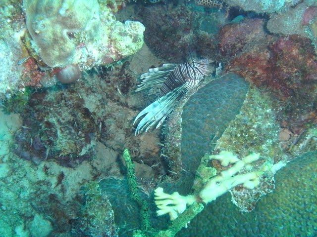 Bonaire 2011 - PICT0047.JPG
