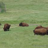 05-11-12 Wildlife Prairie State Park IL - IMGP1555.JPG