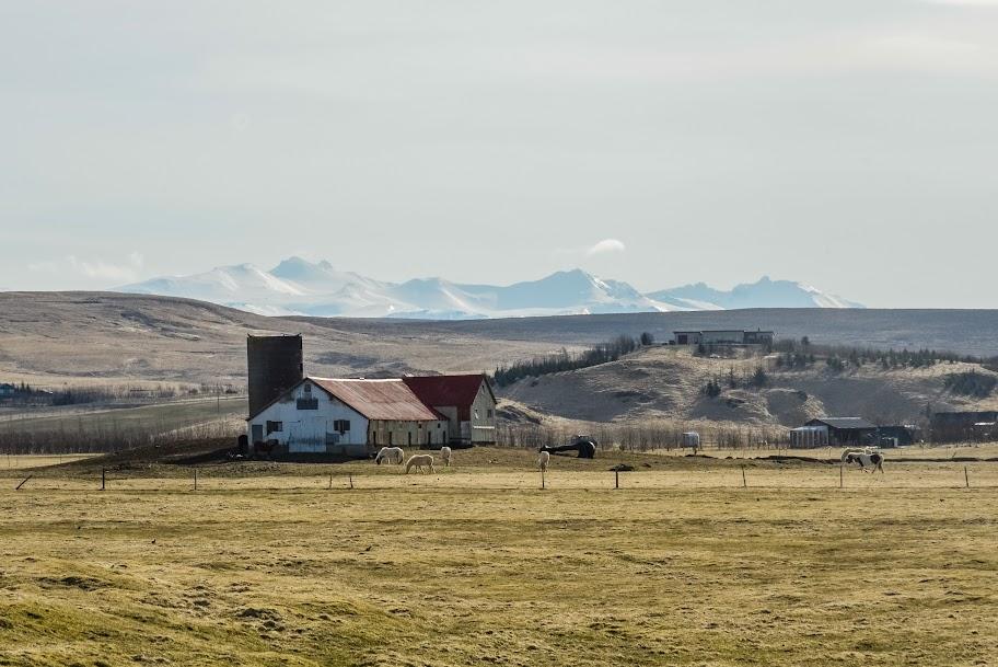 iceland - iceland-29.jpg