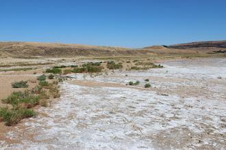 Photo: Берега Соленого озера выглядят причудливо из-за солевого покрова, сквозь который, как сквозь снег весной, пробиваются зеленые кустики.