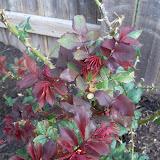 Gardening 2011 - 100_6638.JPG