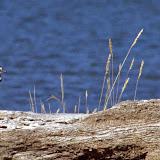 Albert Lagoon birds