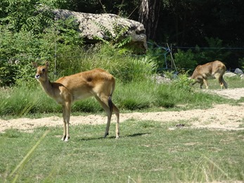 2018.08.21-011 antilopes