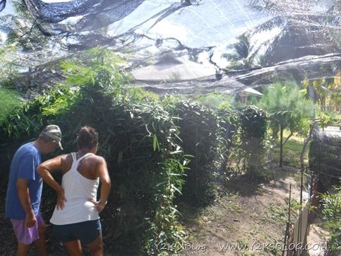 Piantagione di vaniglia - Garden of Eden - Tikehau