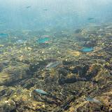 galapagos - Galapagos_FB-108.jpg