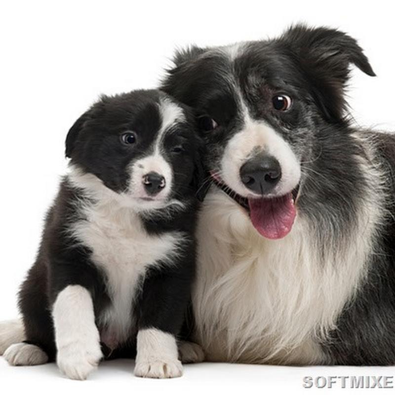 Собаки-долгожители