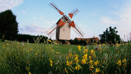 Windmill and Wildflowers, Paris, France.jpg